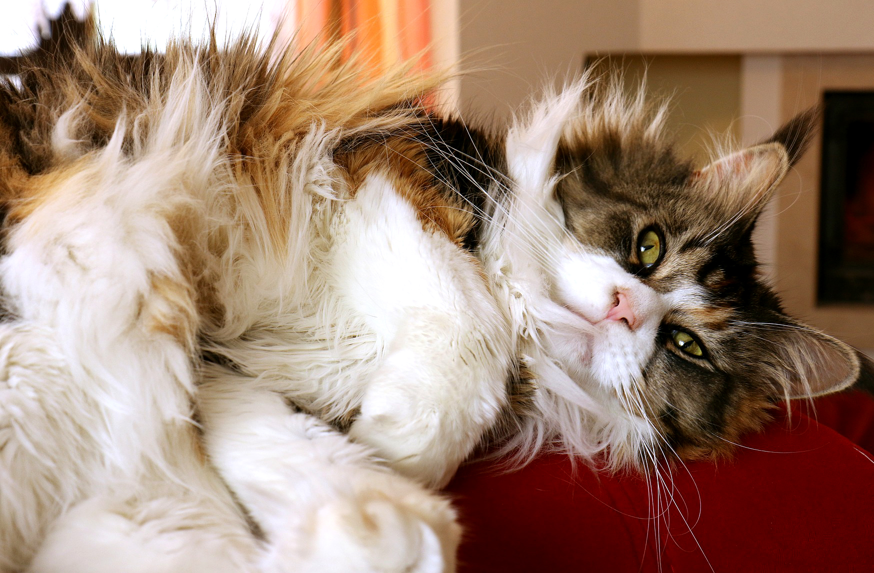 How To Cut Down On Cat Hair Hacks For Cats