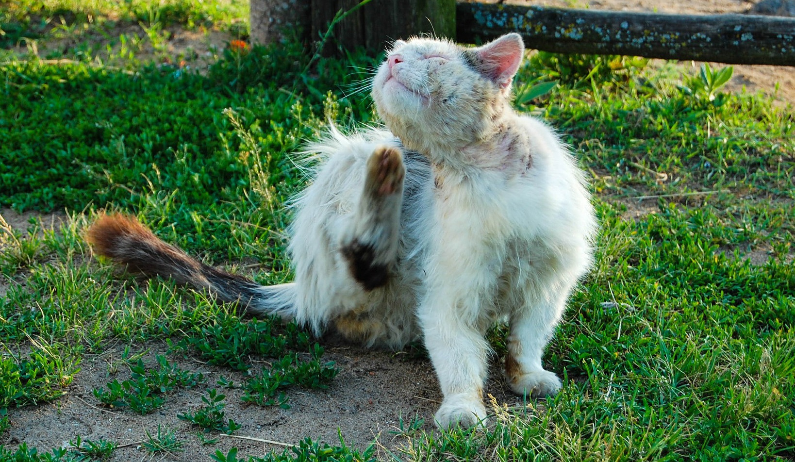 Bathing Your Cat Tips Hacks For Cats